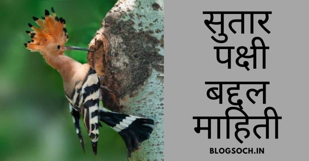 Information About Woodpecker Bird in Marathi