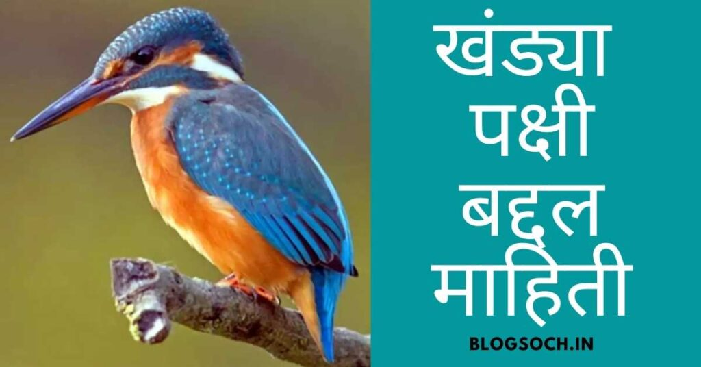 Kingfisher Information in Marathi