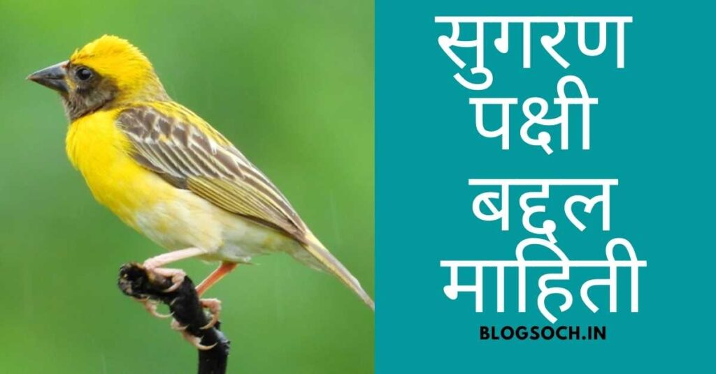 Sugran Bird Information in Marathi