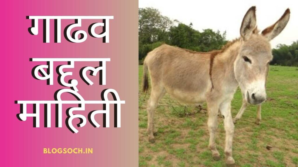 Donkey Information in Marathi