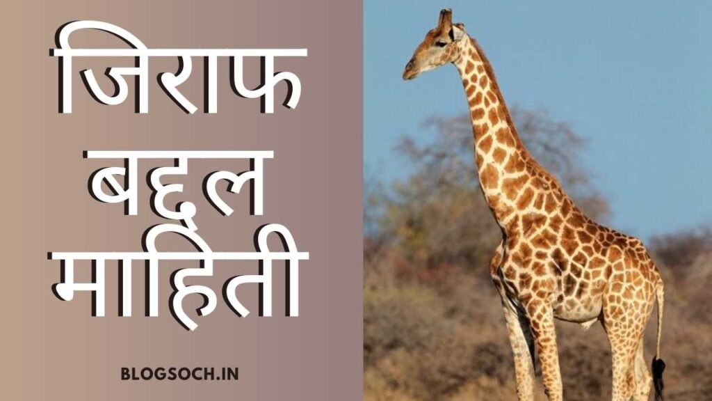 Giraffe Information in Marathi