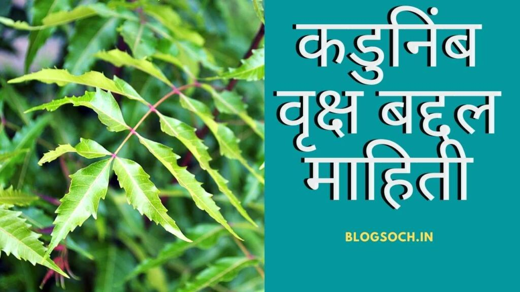 Neem Tree Information in Marathi